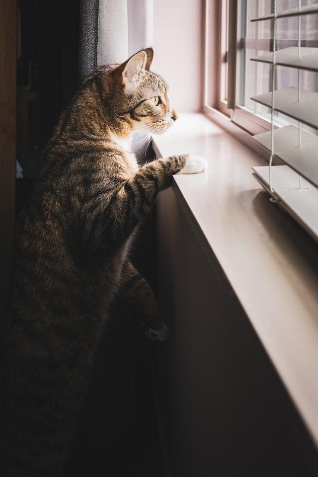 chat-lutter-stress-au-travail